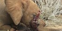 Yahoo macht Gewinn bei Elefantentötung für Elfenbein – Petition