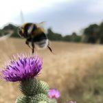 Sieg für Bienen und Hummeln im Kampf gegen Insektizidhersteller / Sulfoxaflor